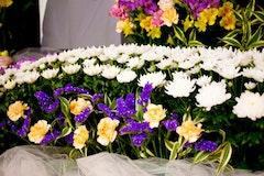 お盆のお供えに最適な花を紹介!選び方・注意点・費用など詳しく解説