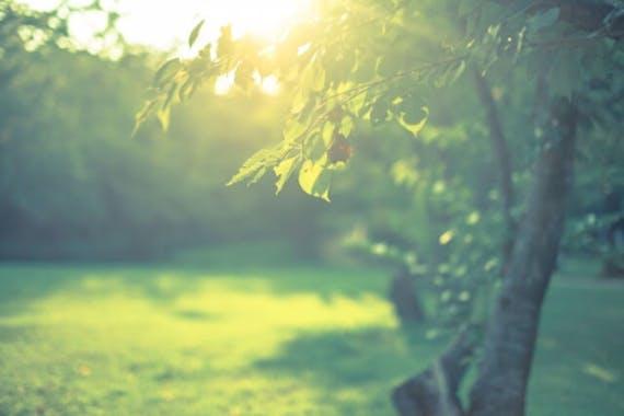茨城県つくば市で人気の樹木葬を紹介!価格やアクセスは?その他の霊園も