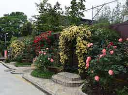 美園桜ヶ丘 無量寺霊園 バラ
