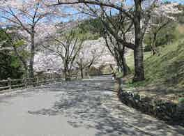 新宮霊園 桜