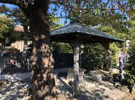 實相寺 のうこつぼ 境内木