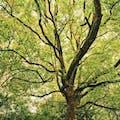 樹木葬にはトラブル・問題点が多い?メリットとデメリットを比較!