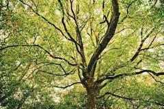 樹木葬のトラブル・問題点とは?メリットとデメリットを比較!