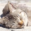 シニア向け猫のペット保険のおすすめ8選!保障内容・保険料を比較!