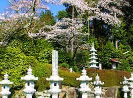 慈恩寺 のうこつぼ 風景