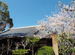 大寶寺 のうこつぼ 桜