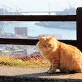 飼い猫の供養の方法5選!供養までの流れと方法別相場もご紹介