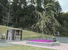 安養寺 永代供養墓と樹木葬 春