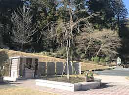 安養寺 永代供養墓と樹木葬 冬