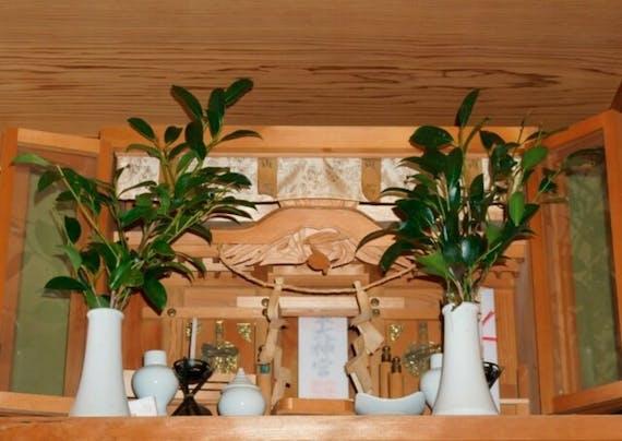 榊を神棚に飾る理由・方法は?処分方法や長持ちのさせ方も解説