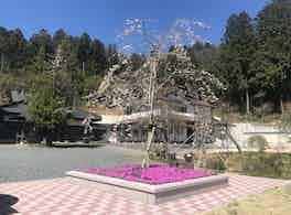 安養寺 樹木葬