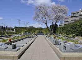 浄光苑 桜と区画