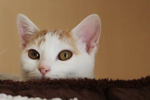 猫が亡くなったら?死亡確認や処理、その後の供養方法を解説
